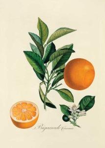 HBC ON10 orange antiq illus 214x300 - HBC-ON10-orange-antiq-illus