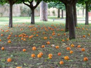 OrangeGarden2 300x225 - OrangeGarden2