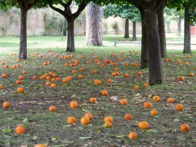 OrangeGarden2 - Апельсиновый рай