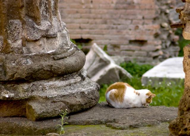 gatti di torre argentina - КотоРим