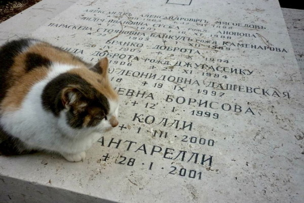375227 10150516686376944 125641883 n 600x400 - Легенды исторического кладбища Тестаччо