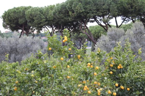 IMG 5556 600x400 - Неизведанный Рим – самая необычная обзорная экскурсия