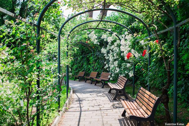 IMG 9045 copia - Сад роз на холме Авентин