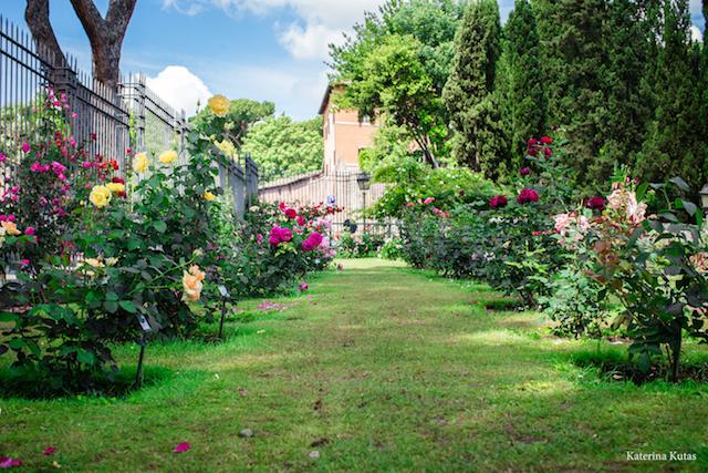 IMG 9104 copia - Сад роз на холме Авентин
