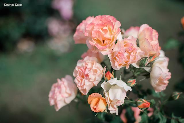 IMG 9108 1 copia - Сад роз на холме Авентин