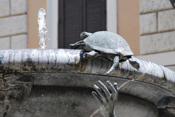 Turtle on Fontana delle Tartarughe Rome 600x400 - Зоосафари по-римски